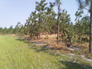 Cover photo for Resources for Storm Damage Recovery for Forest Landowners