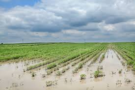 floodedcrops