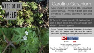 Information on the Carolina Geranium