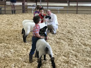 youth showing livestock at fair