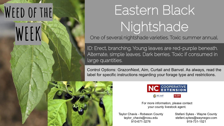 Information on the weed Eastern Black Nightshade