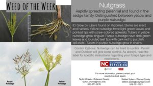 Information on the weed Nutgrass