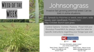 Information on the weed Johnsongrass