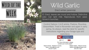 INformation on the weed Wild Garlic