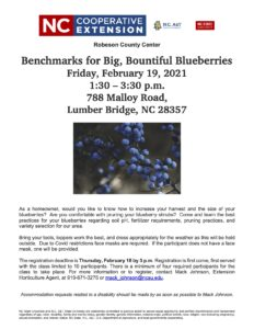 Cover photo for Benchmarks for Big, Bountiful Blueberries