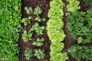"""Cover photo for A """"FAIR"""" Fall Garden"""